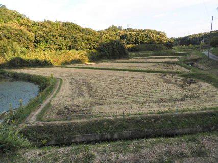 20016-10・12 稲刈りを終えた田圃.JPG