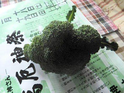 20017-02・12 我が家のスナップ・・・ (1).JPG