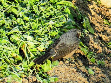 20147-02・16 里山の野鳥達・・・ (4).JPG