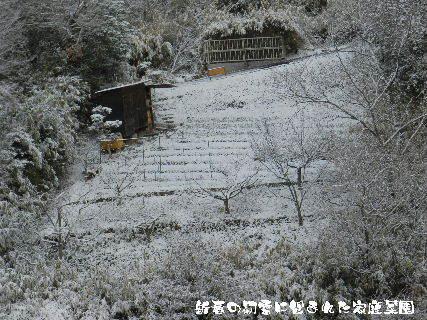 2015-01・02 新春の初雪に包まれた家庭菜園.JPG