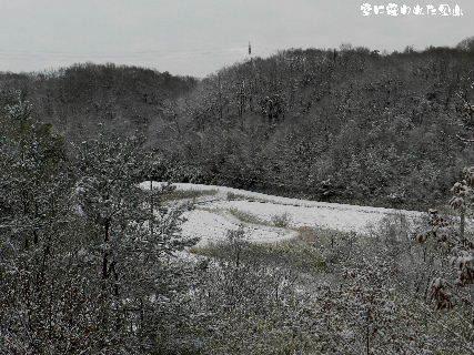 2015-01・03 雪に覆われた里山 (2).JPG