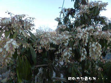 2015-02・21 仄かな香りが・・・ (1).JPG