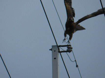 2015-02・27 里山の野鳥達・・・ (2).JPG