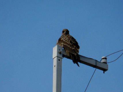 2015-02・28 里山の野鳥達 (1).JPG