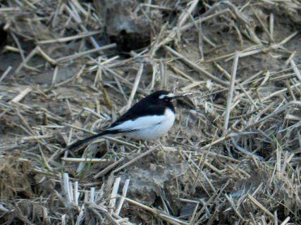 2015-03・24 里山の野鳥達 (1).JPG