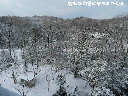 2015-新春の初雪に包まれた里山 (1).JPG