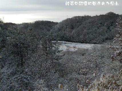 2015-新春の初雪に包まれた里山 (3).JPG