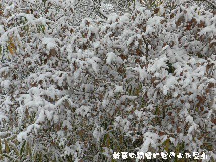 2015-新春の初雪に包まれた里山 (4).JPG