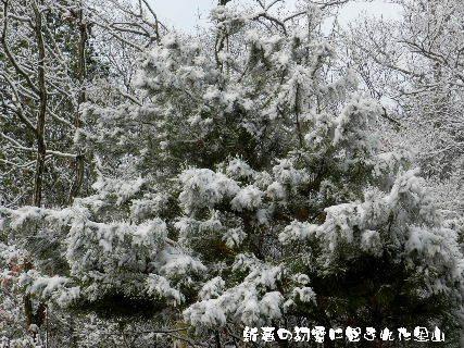 2015-新春の初雪に包まれた里山 (5).JPG