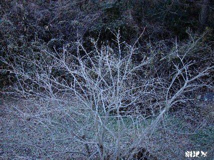 2016-02・08 厳寒の里山模様を・・・ (2).JPG