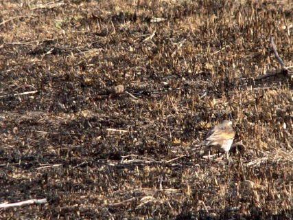 2016-03・12 里山の野鳥達・・・ (2).JPG