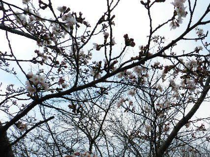 2016-03・31 里山にも春が・・・ (6).JPG