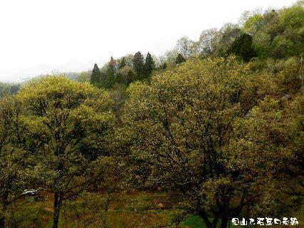2016-04・13 里山は若葉の季節 (2).JPG