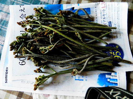 2016-04・14 今日の収穫 (1).JPG