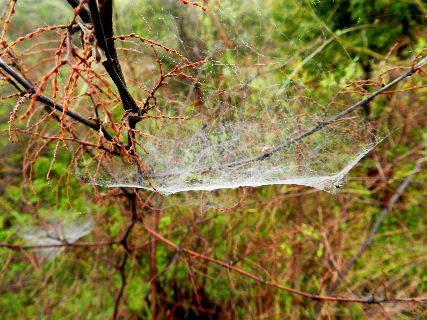 2016-04・14 蜘蛛の巣が・・・.JPG