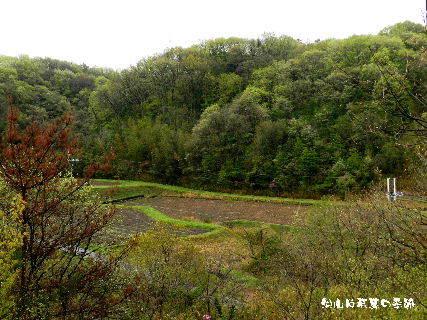 2016-04・14 里山は若葉の季節 (3).JPG