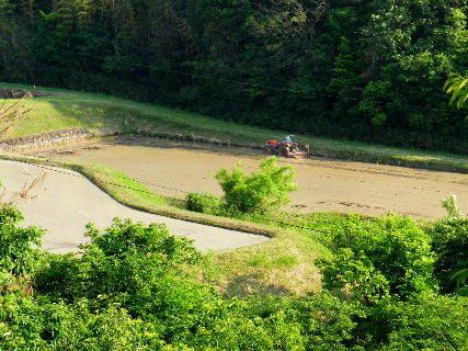 2016-05・22 初夏の里山は・・・ (1).JPG