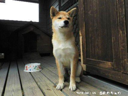 2016-06・05 今日のリュウ (1).JPG