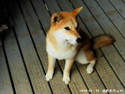 2016-07・29 今日のリュウ (3).JPG