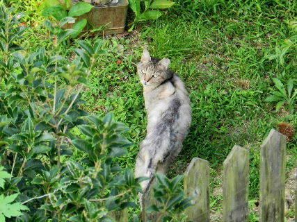 2016-08・14 我が町の野良猫 (2).JPG