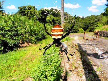 2016-08・23 里山の生物達・・・ (2).JPG