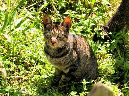 2016-08・30 里山の野良猫・・・ (2).JPG