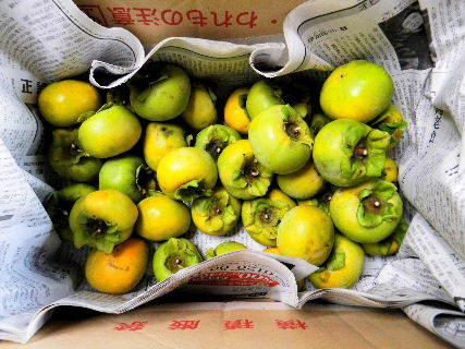 2016-09・23 今日の収穫・・・ (2).JPG