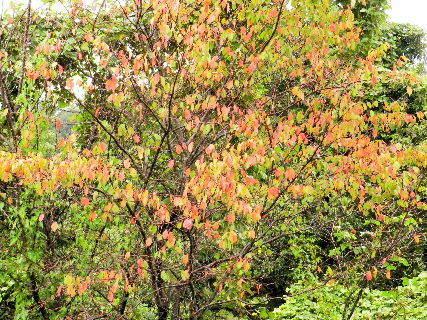 2016-10・03 雨に濡れた紅葉を・・・ (1).JPG