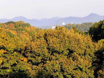 2016-11・12 里山も紅葉二・・・.JPG