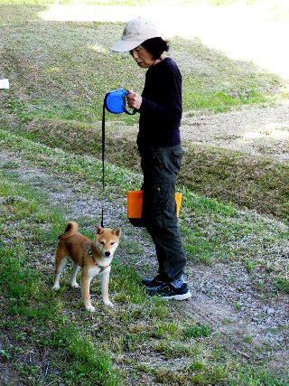 2016-05・14 散歩中のリュウ.JPG
