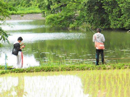 2016-06・05 今日の池には (1).JPG