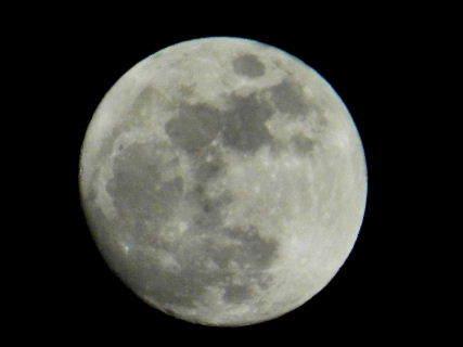 2017-01・11 夜半の空に輝く月 (1).JPG