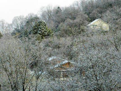 2017-01・21 今日も里山は・・・ (1).JPG