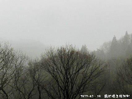 2017-01・30 霧に煙る里山・・・ (1).JPG