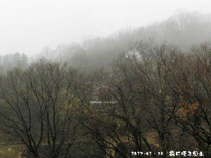 2017-01・30 霧に煙る里山・・・ (3).JPG