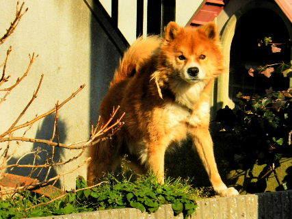 2017-02・04 ご近所の番犬・・・.JPG