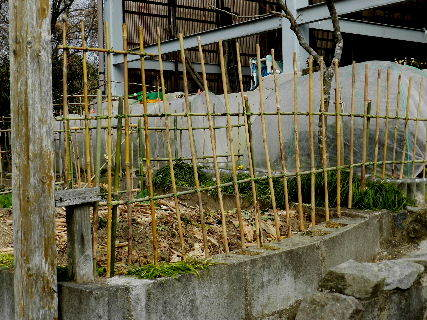 2017-03・02 我が家のスナップ・・・ (3).JPG