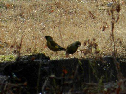 2017-03・02 里山の野鳥達・・・ (4).JPG
