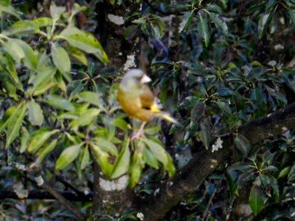 2017-03・27 里山の野鳥達・・・ (1).JPG