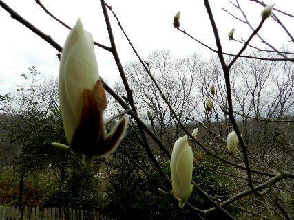 2017-04・06 里山の春を彩る花達 (5).JPG