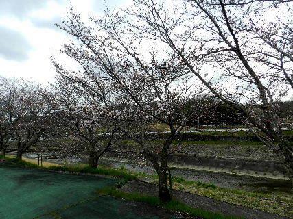 2017-04・06 里山の春を彩る花達 (6).JPG