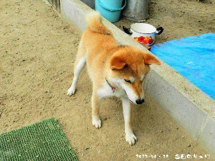 2017-06・28 今日のリュウ・・・ (2).JPG