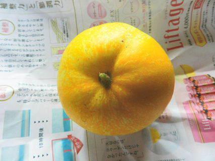 2017-07・27 我が家のスナップ・・・ (8).JPG