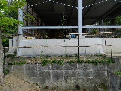 2017-09・27 我が家のスナップ・・・ (1).JPG