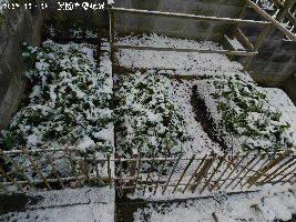 2017-12・14 雪化粧の里山 (4).JPG